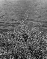 La Loire (Philippe Torterotot) Tags: chamonix45n2 fomapan100 4x5 noirblanc nb largeformat grandformat loire loireatlantique fleuve analog argentique