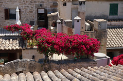 bouganville above the roofs (picturesbywalther) Tags: flowers red rot spain roofs stadt altstadt oldtown mallorca dach balears dcher