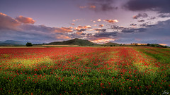 goodbye to spring (Javy Njera) Tags: sunset red naturaleza primavera nature field clouds forest landscape atardecer la spring spain rojo natural dusk cereal paisaje nubes poppy campo monte rioja anochecer amapola