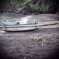 "Dog and beach, Thailand. • <a style=""font-size:0.8em;"" href=""http://www.flickr.com/photos/75840380@N06/6815636078/"" target=""_blank"">View on Flickr</a>"