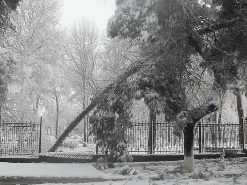 Последствия снегопада в Курган-тюбе