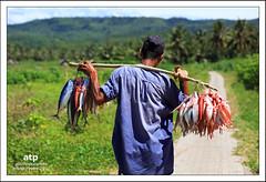 Selling Fish (ali trisno pranoto) Tags: fish indonesia landscape fishing fisherman selling ikan mancing sawarna banten alitrisnopranoto