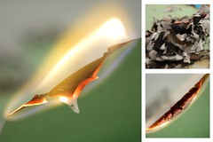 55-366 (Amalid) Tags: macro closeup canon project paper fire eos bokeh burning libya tripoli 2012  burningpaper  project365  project36555 project366 canoneos450d 366project canoneosdigitalrebelxsi efs1855mmisf3556  365daytodayproject
