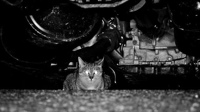 Today's Cat@2012-02-14