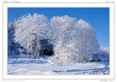 Hiver | Winter | Invierno (BerColly) Tags: trees winter sky snow france landscape google flickr hiver ciel arbres paysage moreno col auvergne puydedome neuge bercolly