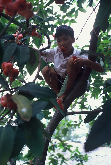 Accomplished Child with Fruit