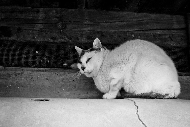 Today's Cat@2012-02-17