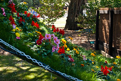 Blowing in the Wind (Jocey K) Tags: flowers trees newzealand christchurch fence garden carpet colours chain southisland whimsical botanicgardens festivalofflowers