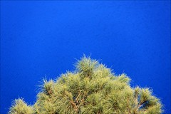 tree and lake (loop_oh) Tags: ocean road blue lake green bass great australia victoria mount australien grn greatoceanroad bluelake commonwealth gruen strait rd downunder mountgambier greatoceanrd gambier bight bassstrait