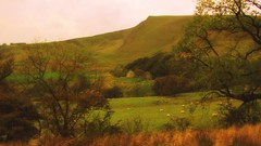 Romance in the valley (Dazzygidds) Tags: trees sheep derbyshire romance pasture romantic serene framing nationaltrust tranquil darkpeak peakdistrictnationalpark highpeak castleton winnatspass hopevalley soften peverilcastle