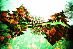 castle in bloom (Hodaka Yamamoto) Tags: flower castle xpro lomography crossprocessed xprocess doubleexposure crossprocess double lomolca multipleexposure crossprocessing tripleexposure doubles