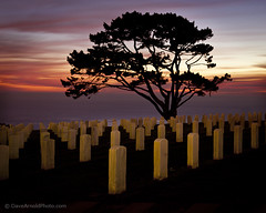 Rosecrans National Cemetery (Dave Arnold Photo) Tags: california ca sunset usa tree cemetery grave clouds coast us photo memorial pacific image sandiego military picture pic calif ptloma national photograph tombstones westcoast usnavy pointloma gravemarker usmilitary rosecrans militarycemetery westernus imges davearnold darnold 3rdfleet davearnoldphotocom thirdfleet galleryoffantasticshots
