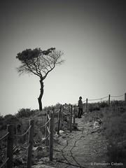 Looking for a shadow (Fernando Cabalo) Tags: road portrait blackandwhite bw white black tree love blancoynegro blanco girl silhouette portraits contraluz landscape árboles solitude noir mood alone chica shadows walk retrato negro bn lonely soledad miradafavorita ipad2 ldlportraits