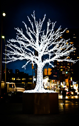 Day 54 - White Tree