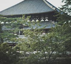 (skidu) Tags: park trees nature japan canon square landscape temple eos 50mm shrine f14 nara 550d