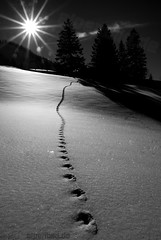 Footprints in Snow  -  expl..3 (alpenbild.de) Tags: schnee bw sun white mountain snow black mountains alps tree nature landscape bayern bavaria natur tracks spuren footprints berge sw monochrom alpen landschaft sonne baum chiemgau aschau 150fav chiemgaueralpen