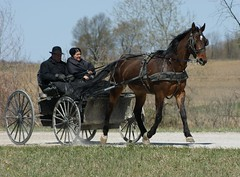 2012-04-22_Long Legs (Mark Burr) Tags: holyrood mennonite horseandbuggy langside brucecounty oldordermennonite greyoxavenue