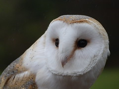 Tythe 2 (GillWilson) Tags: worldowltrust