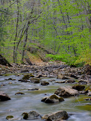 Sobers Run (5) (Nicholas_T) Tags: trees creek spring lowlight rocks stream hiking pennsylvania cascades creativecommons ravine lehighvalley northamptoncounty jacobsburgstatepark jacobsburgenvironmentaleducationcenter sobersrun