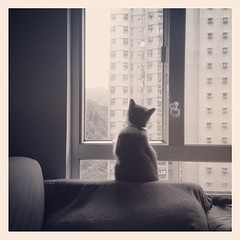 12:53pm #mono#monochrome#monotone #貓 #pet #kitty #cats #cat #猫 #kitten #neko #cute #cats #Catstagram #貓咪 #고양이 #iphoneart #mobileart #fifi飛飛 #iheartmonocats #nofinder