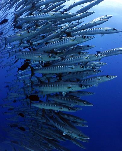 Isola di Komodo - Indonesia
