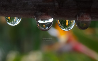 Drops of Paradise
