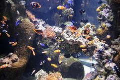 fish aquarium nemo kala akvaario
