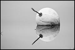 Reflection (mmoborg) Tags: sweden sverige mmoborg mariamoborg thepinnacle20120504