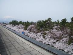 R1011466 (M.Murakami) Tags: aomori  cherryblossom hirosaki  gxr a16