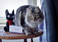 Happy Friday the 13th, miau and meow! (pianocats16, miau...) Tags: black cute cat kitty plush figure jiji