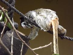 Projeto educativo da Fundao Zoo-Botnica repassa informaes sobre rpteis aos visitantes (Portal PBH) Tags: projeto fundao bh educativo pbh zoobotnica cutura