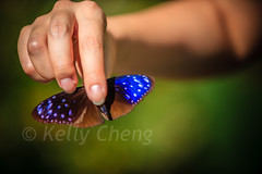 Taiwan-121113-232 (Kelly Cheng) Tags: travel color colour green tourism nature animals horizontal fauna butterfly daylight colorful asia day taiwan vivid colourful traveldestinations  northeastasia