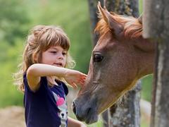 Just you and me (FocusPocus Photography) Tags: horse animal child kind arabian pferd encounter tier foal fohlen araber marbach begegnung araberfohlen hauptundlandgestt