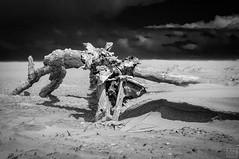 Treibgut (MAICN) Tags: bw beach strand landscape mono nikon meer natur norderney northsea nordsee d90 einfarbig schwarzweis