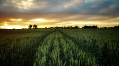 Friday June Night (cofarrell25) Tags: june landscape landscapes landing sky clouds cloud ireland weather summerweather summer cloudscape background earthcaptures evening sunset sunsets favourites nature natural welltaken beautyearth meath earth fieldofvision field fields ngc