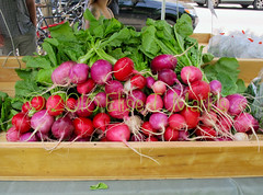 Radishes At The Farmers Market (Elise Creations & Passions) Tags: food greenleaves plant vegetables canon outdoors radishes flora outdoor vegetable rootvegetables woodenbox burlingtonvermont greenfoliage greenstems outdoorevent burlingtonfarmersmarket redradishes pinkradishes elisecreationspassionsphotography elisemarksphotography spring2016 radishesatthefarmersmarket colorfulradishes
