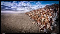 _SCH3820-Mussel Beach (trinrn7) Tags: beach shellfish padreisland sandocean