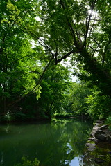 'Greenery' i. (miranda.valenti12) Tags: wood trees light plants sunlight plant color tree green water leaves lines forest river outdoors stream hiking pa vegetation greenery leading easton woodsy