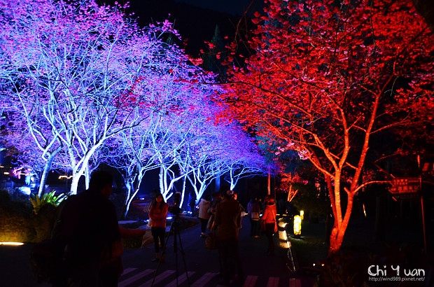 九族文化村櫻花祭12.jpg