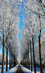 Snow trees! (Paul Rosenhart) Tags: snow nikon sneeuw noordholland schermerhorn d80 paulrosenhart ringexcellence blinkagain dblringexcellence bestofblinkwinners flickrstruereflection1 rememberthatmomentlevel1 rememberthatmomentlevel2 rememberthatmomentlevel3