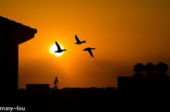 _DSC9247 (mary~lou) Tags: sunset urban birds silhouette buildings fletcher three nikon mary gamewinner 15challengeswinner challengegamewinner friendlychallenges mary~lou gamex2winner gamex3winner pregamewinner