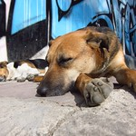 "Dog with Graffiti <a style=""margin-left:10px; font-size:0.8em;"" href=""http://www.flickr.com/photos/14315427@N00/6788231220/"" target=""_blank"">@flickr</a>"