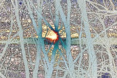 Strangle of Branches (Kansas Poetry (Patrick)) Tags: elm lawrencekansas clintonlake patrickemerson sylviaplatt wwwpatrickemersonzenfoliocom patricknancytieuplooseends