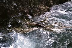 swirling kelp #1 (mikeasaurus) Tags: ocean blue sea newzealand holiday black green nature out grey meer fuji tide low extreme natur gray going 200asa olympus where nz grn blau coming tasmansea westcoast seetang meets downunder trip35 colorfilm pihabeach aoteoroa december2011 peoplesummersommerrockssteinevolcanicexploring seaweedkelpswirlingmovement