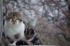chat (J-C Isabelle) Tags: cat chat yeux ferme flou loiret