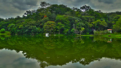 Itatiba | So Paulo (Thiago Piu) Tags: brazil reflection tree verde green nature water gua brasil interior sopaulo natureza rvore reflexo hdr itatiba