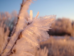 Frosty Countryside Morning :):) (Mr. Happy Face - Peace :)) Tags: lighting morning winter snow canada cold macro ice colors closeup composition rural sunrise wow wonderful landscape countryside amazing nice fantastic focus frost crystals shine shot natural artistic wheat exploring farming villages alberta stunning icy capture sunrisesunset prairies tones towns mothernature 2012 artistry planetearth greatshots goreous jewerlry mrhappyface equskiloreawards