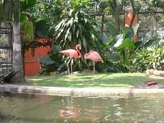 Flamingos (Caneckman) Tags: parque naturaleza animales tabasco villahermosa vegetacion yumka