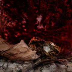 Apple of Paradise - Guerilla Art - Mirror Ground Spiegel Grund Steinhof - Hommage a Friedemann der Teppichweber (hedbavny) Tags: red streetart macro rot art abandoned tomato psychiatry mirror blood rust paradise decay spiegel spuren shangrila mementomori dried mold transition decomposition rost stein tomate vanitas urbanphotography vergnglichkeit guerillaart anonym paradies narrenturm penzing schimmel verfall unendlich kunstimffentlichenraum naturezamorta endlos htteldorf friedemann verwandlung steinhof irrenhaus vertrocknet getrocknet schimmelpilz baumgartnerhhe paradiesapfel wienvienna paradeiser sterreichaustria aktionismus blutrot ottowagnerspital psychiatrischeskrankenhaus stadtwien solanumlycopersicum spiegelgrund appleofparadise authorless dehumidified narrenhaus gesundheitseinrichtung friedemann1 friedemannderteppichweber frderpflegeheimbaumgartnerhhe pflegeheimsanatoriumstrase sozialmedizinischeszentrumbaumgartnerhhe ottowagnerspitalmitpflegezentrum socialmedicalcenter pavillon35 neurologischeskrankenhausmariatheresienschlssl hedbavny friedemannhoflehner ingridhedbavny