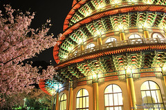 Partial (Singer ) Tags: sunset plant flower tree architecture canon temple nightshot taiwan singer sakura cherryblossoms taipei         nightscenes           singer186